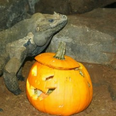 Parques infantiles : Halloween en Zoo Aquarium